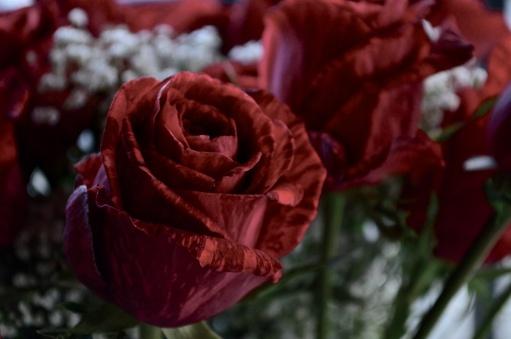 Rose - DC Lessoway