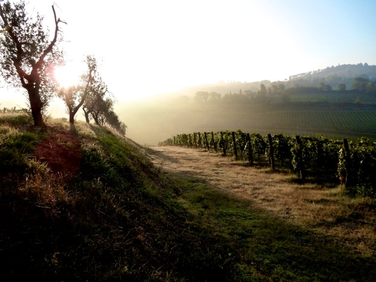 Tuscany Vineyard by DC Lessoway