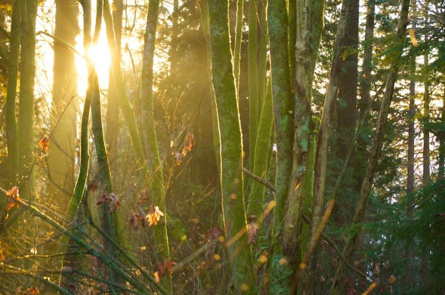 trees-1-jan-25-2014
