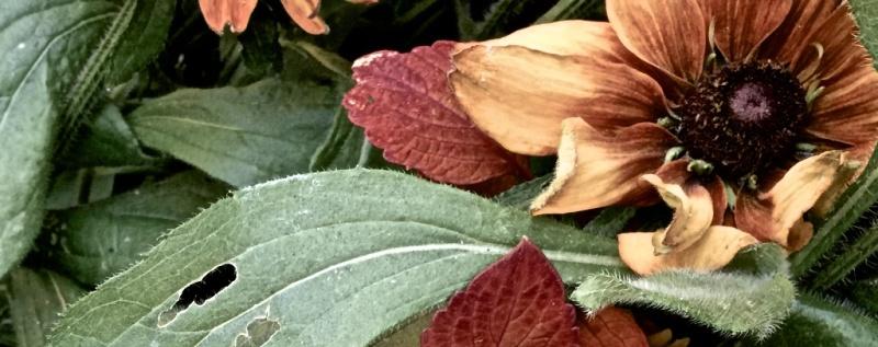 flowers-sept 3 2016
