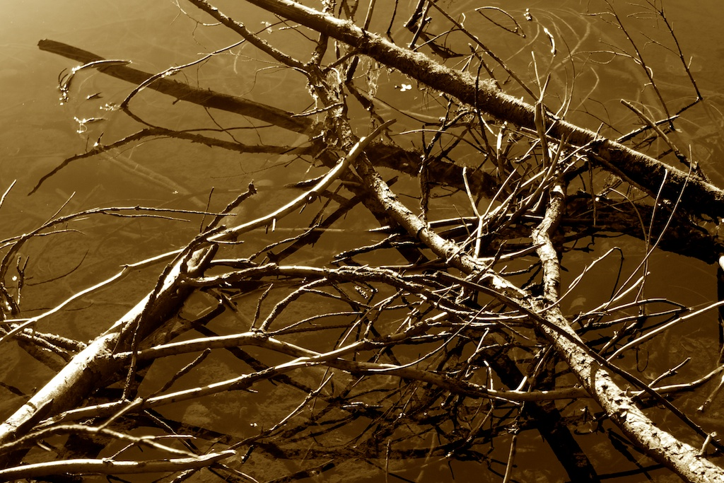 branches-in-water-007
