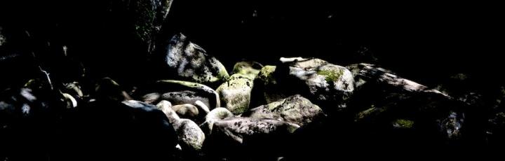 july-25-2017-forest-04-rocks
