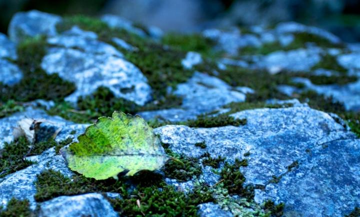 Leaf-stone